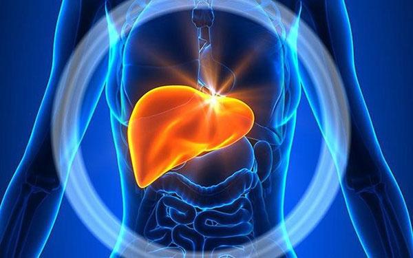 Người có khiếm cao khiêm tốn dễ mắc bệnh gan