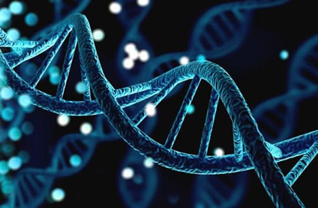 Có khoảng 700 gen di truyền quyết định chiều cao