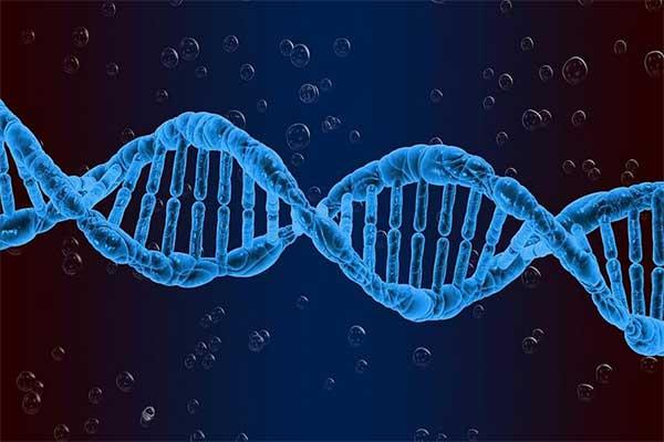 yếu tố gen di truyền